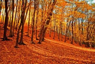 美麗的秋天樹林風景圖片