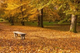 秋天落葉風景圖片